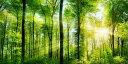 絵画風 壁紙ポスター (はがせるシール式) 森林 パノラマ 森林浴 日光浴 陽射し 太陽 緑の森 目の保養 癒し キャラクロ SNR-101S1 (1152mm×576mm) 建築用壁紙+耐候性塗料 インテリア