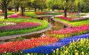 絵画風 壁紙ポスター (はがせるシール式) チューリップ畑 代々木公園 チューリップガーデン 花畑