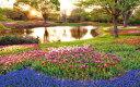 絵画風 壁紙ポスター (はがせるシール式) 夕陽とチューリップ畑 代々木公園 チューリップガーデン