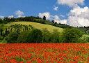 絵画風 壁紙ポスター (はがせるシール式) トスカーナの空と丘とポピー畑 イタリア 花畑 フラワーガーデン キャラクロ FLGD-012A2 (A..