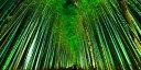 絵画風 壁紙ポスター (はがせるシール式) -地球の撮り方- 浮かび上がる竹の道。京都嵐山のライトアップされる嵯峨野、竹林の道 パノラマ 日本の絶景 キャラクロ C-ZJP-074S1 (1152mm×576mm) 建築用壁紙+耐候性塗料 インテリア