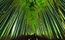 絵画風 壁紙ポスター (はがせるシール式) -地球の撮り方- 浮かび上がる竹の道。京都嵐山のライトアップされる嵯峨野、竹林の道 日本の絶景 キャラクロ C-ZJP-074W2 (ワイド版 603mm×376mm) 建築用壁紙+耐候性塗料 インテリア