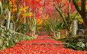 絵画風 壁紙ポスター (はがせるシール式) -地球の撮り方- 広がる赤もみじの絨毯、滋賀県の鶏足寺の紅葉 日本の絶景 キャラクロ C-ZJP-088W1 (ワイド版 921mm×576mm) 建築用壁紙+耐候性塗料 インテリア