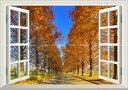 絵画風 壁紙ポスター (はがせるシール式) -窓の景色- -地球の撮り方- どこまでも続く並木道 メタセコイア並木の紅葉 日本街路樹百景 滋賀県高島市 日本の絶景 【窓仕様/トリックアート】 キャラクロ C-ZJP-043MA1 (A1版 830mm×585mm) 建築用壁紙+耐候性塗料