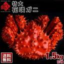 ≪真っ赤に輝く幻の蟹≫超特大 花咲蟹 花咲ガニ 1.5kg前...