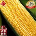 北海道産 とうもろこし ゴールドラッシュ(L〜2L) 16本生で食べても甘い! グルメ お土産 お取り寄せ ギフト とうもろこし トウモロコシ コーン 野菜 食品 景品