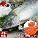 生秋鮭 メス 大3.0〜3.5kg 北海道産 【送料無料】旬の秋鮭を丸ごと一本お届け!新鮮なイクラもまるごと入ってお値頃価格!さけ シャケ 生 秋鮭 しゃけ あきあじ 鮭 メス 生鮭 天然 筋子 生いくら