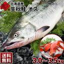 【10月31日販売終了】生秋鮭(北海道産)オス 大3.0〜3...