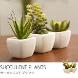 観葉植物 光触媒 人工植物 グリーン 光触媒観葉植物 サーキュレントプランツ3点セット