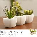 光触媒 観葉植物 フェイクグリーン サボテン ミニ セット サーキュレントプランツ3点セット