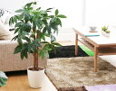 RoomClip商品情報 - 光触媒 観葉植物 フェイクグリーン パキラ Sサイズ 消臭