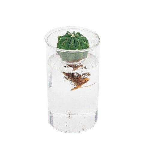 スパイス バルブベース /spice BULB VASE SHORT【フラワーベース】【水耕栽培】【花瓶】【花器】【インテリア雑貨】【花びん】【ギフト】【プレゼント】
