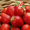 RoomClip商品情報 - 甘酸っぱいイチゴの香り。ストロベリー -Strawberry-ハイグレード アロマクラフト用 フレグランスオイル 10ml(手作り石鹸、香水、バスソルト、アロマペンダント用オイル)