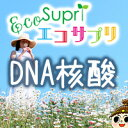 【エコサプリ】DNA核酸 (約60日分)