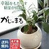 観葉植物のイメージ