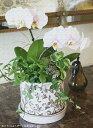 産地直送! 日高農園さんのこだわり蘭の寄せ植えおまかせ 15,000円