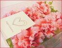 エンジェルカーネーションインテリアやプレゼントにフリルのような花びらが可愛いカーネーション6個入り【半額・50%OFF】
