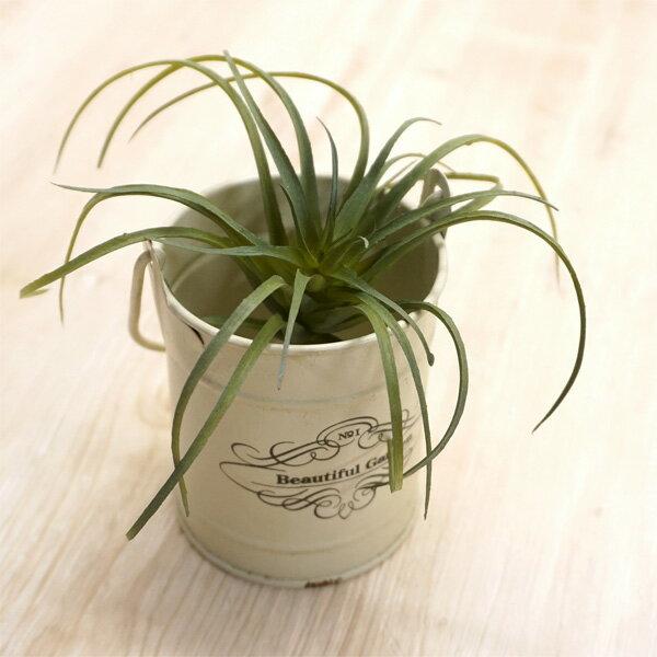 【人工植物】アスカ(asca) ティランドシア ...の商品画像