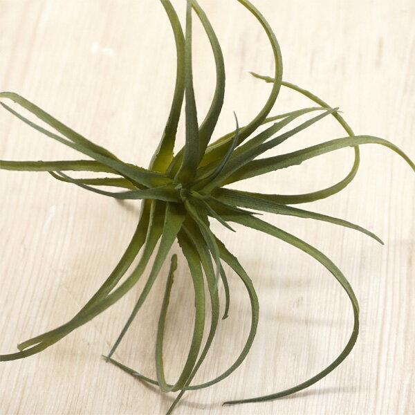 【人工植物】アスカ(asca) ティランドシア...の紹介画像2