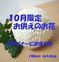 Img56983389