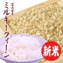 【新米】お米 送料無料 ミルキークイーン 玄米 10kg 富山県産 あす楽 安い 美味しい