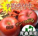 【予約商品】青森県産サンつがる訳あり5kg詰(約14〜23玉入)※発送は9月11日から開始