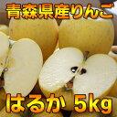 【数量限定】青森県産はるか5kg(14〜23玉入り)