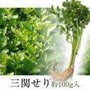 【産地直送/同梱にオススメ】三関セリ(約...