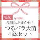 【2017福袋】つるバラ大苗4鉢 品種はおまかせ!/同梱不可/順次配送