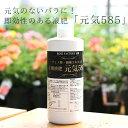 バラ専用有機液肥 元気585 1000cc by ROSE FACTORY(元気くん)/バラを元気に...