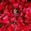 プリザーブドフラワー バラ 1輪 『ゴールドプレスティージ プラチナローズ』 花 薔薇 ローズ 24金 プロポーズ 結婚祝い 開店祝い 結婚記念日 ブリザードフラワー プレゼント ギフト 贈り物 送料無料 写真入りメッセージカード