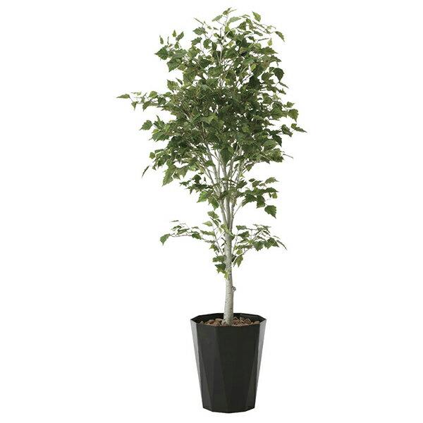 【送料無料】【ポイント10倍】《アートグリーン》《人工観葉植物》光触媒 光の楽園 白樺1.9