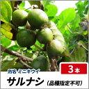 サルナシ (品種指定不可) ポット苗 【3本セット】