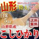 【送料無料】山形県産 こしひかり 白米 5kg 29年産 特A米 精米 一等米 ギフト 産地直送 通販 ブランド米