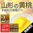 遅れてゴメンネ 敬老の日 山形県産 黄桃 2kg(7〜12玉前後)ギフト 化粧箱入り 硬い桃