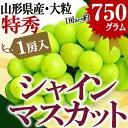 山形県産 特秀 大粒 シャインマスカット 1房(約750g前...