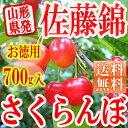 山形県産 さくらんぼ 訳あり 佐藤錦 700g(バラ詰め) 送料無料