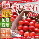 さくらんぼ 佐藤錦 200g (100g×2) 山形県産 産...