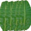 (送料無料) 沖縄県産バナナの葉(10枚)