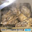 【冷凍缶蒸しセット同梱専用】宮城県産 殻付き牡蠣 1,5kg ※蒸し用の缶は付属しません※