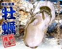 【送料無料】宮城県産殻付き牡蠣20個【LL】 【BBQに最適♪】産地より活きたまま発送【カキ】【かき