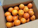 <予約販売>【送料無料】種子島産たんかん、サイズ混合・5Kg<ご家庭用>