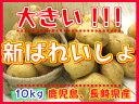 【期間限定】九州から届きました!!!デッカイ!!新ばれいしょ【10kg】3L〜2Lサイズ新じゃが●新馬鈴薯●鹿児島産●大きいじゃがいも●ポテト