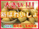 【期間限定】九州から届きました!!!デッカイ!!新ばれいしょ【5kg】3L、2Lサイズ新じゃが●新馬鈴薯●長崎県産●大きいじゃがいも●ポテト●