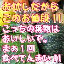 【 おススメ5点!!! 】Saiの野菜セット!!旬の新鮮な野...