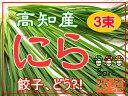 ニラ 3束セット 【高知県産】 まとめ買い☆ にら ☆