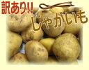 超!! 訳ありじゃがいもたっぷり!!!【ポッキリ】送料無料ジャガイモ 5kg新馬鈴薯 と ゴールド混合3LサイズからSまで大きさバラバラ