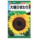 トーホク 大輪ひまわり 種 草丈1.2~2m(花壇 切花 向日葵 夏 ヒマワリのたね 種子 自由研究)