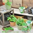 「エコットS」地球にやさしいエコポットで育てる ハーブ栽培キット 選べる6種類!ミント、バジル、ラベンダー、ワイルドストロベリー、クレソン、パクチー(インテリアグリーン・おしゃれ・かわいい 栽培セット・ガーデニング・家庭菜園 )