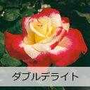 【予約苗】【バラ苗】 京成バラ園 スイム&エリス ダブル ディライト 大苗 7号鉢 覆輪系
